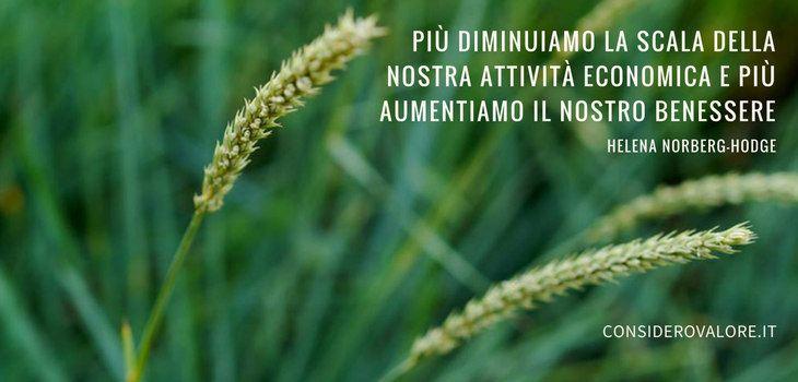 Spighe di grano con citazione di Helena Norberg-Hodge: Più diminuiamo la scala della nostra attività economica e più aumentiamo il nostro benessere