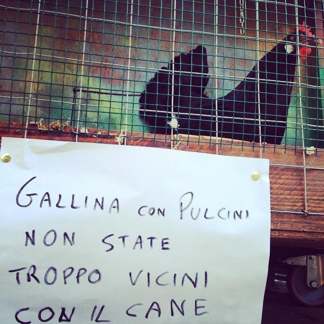 Mercato-Terra-BO_galline