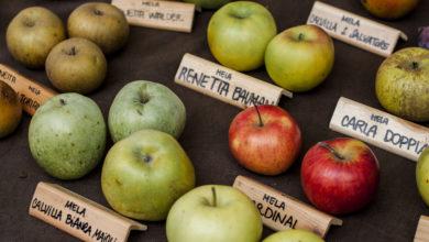 Meglio la mela di Adamo o quella di Biancaneve?