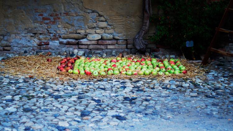 Mele biologiche - Frutti antichi
