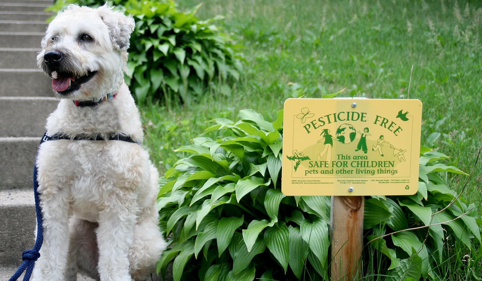 Pesticide_free_yard
