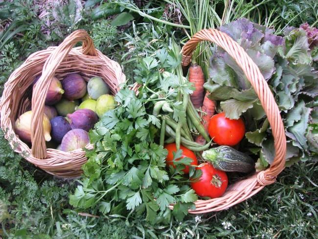 Ceste di fichi e verdure appena colte