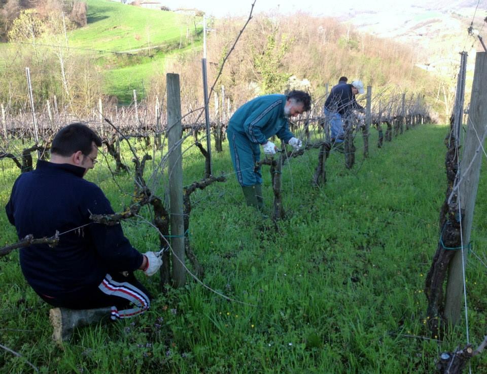 Attività di viticoltura biologica e sociale presso la cantina I Perinelli, a Ponte dell'Olio in Val Nure, PC.