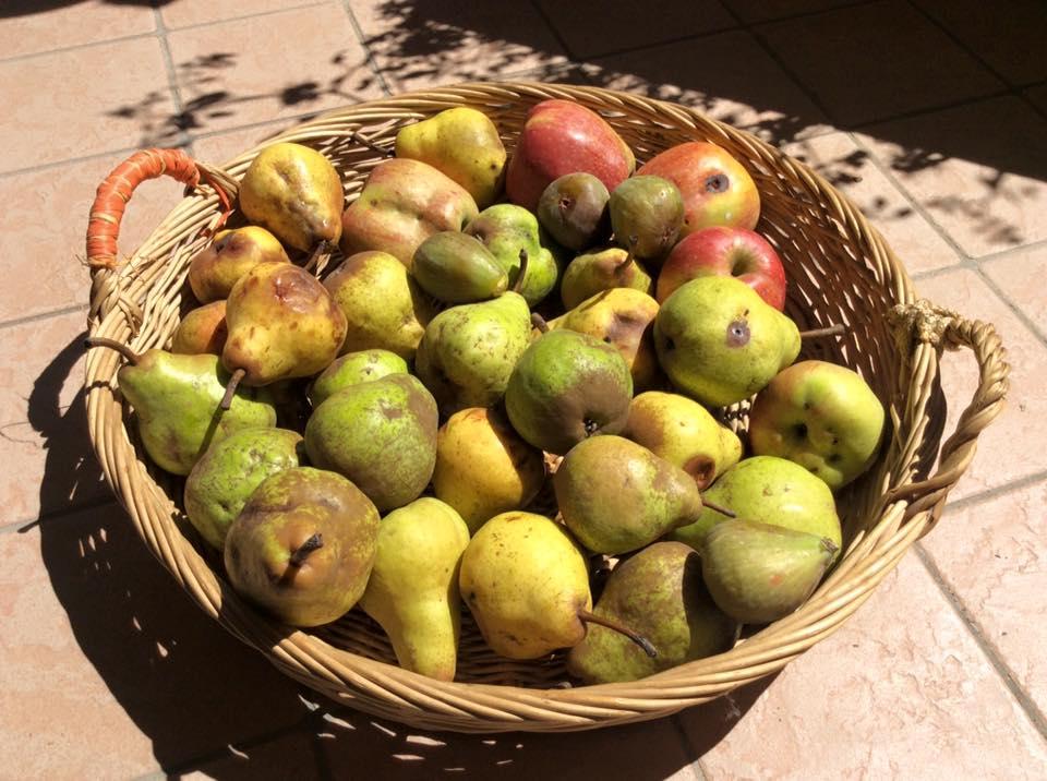 Aspetto di mele e pere completamente non trattate (oltre il biologico).