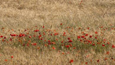 Il ddl 998 sull'agricoltura biologica: una proposta di legge e di speranza