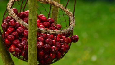 Di frutta perfetta e seni sferici: siamo davvero pronti al biologico, quello vero?