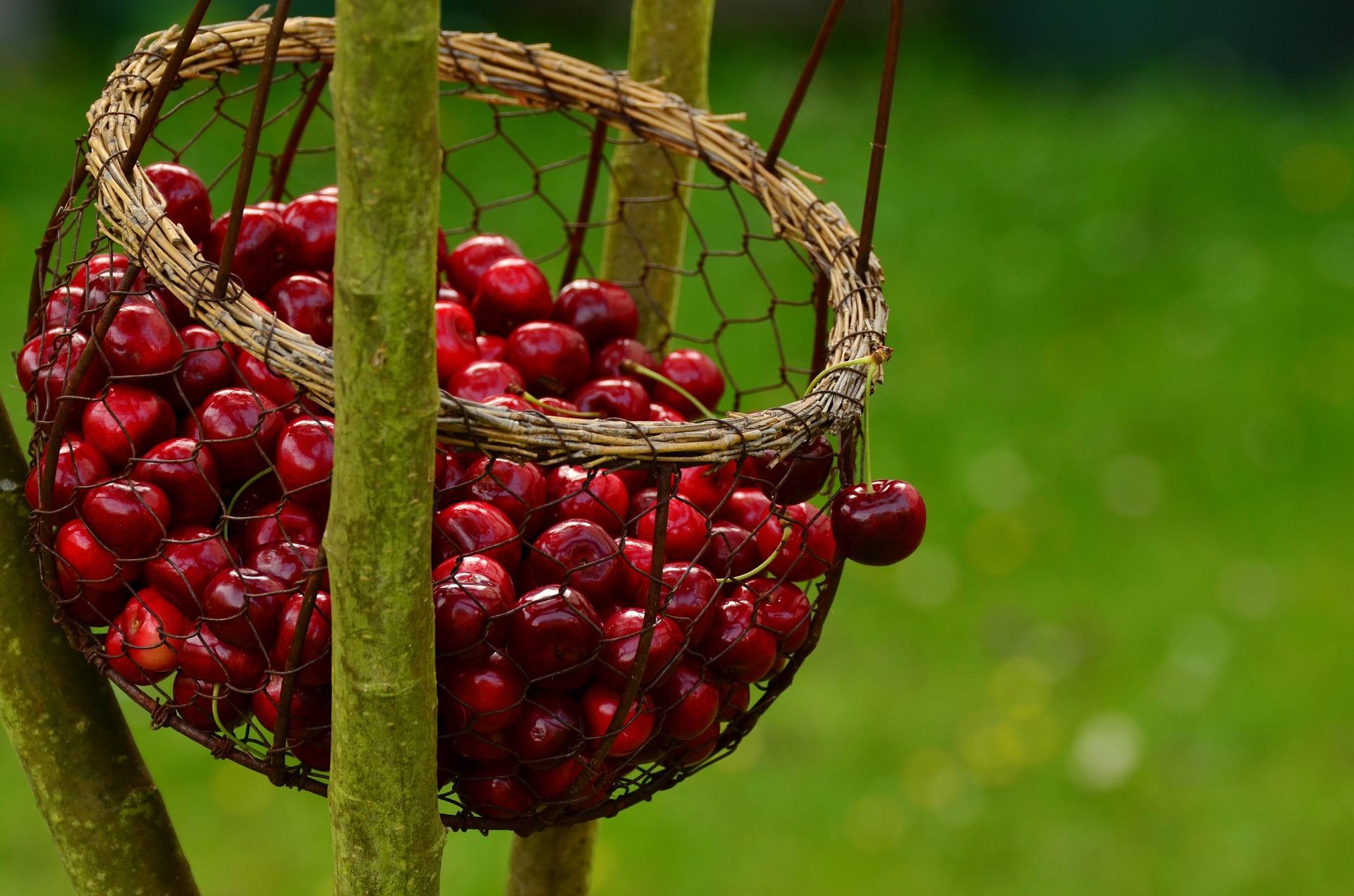 Blog di incontri di frutta perfetto