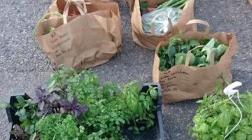 sacchetti spesa contadina circolo Reko