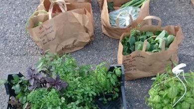 Il ReKo approda in Italia, a Reggio Emilia: un mercato locale di spesa contadina