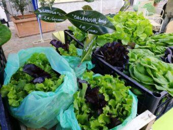 Cespi di insalata e cartellini fatti con le foglie