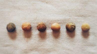Come cucinare i legumi: tutti i tempi di cottura e ammollo, per non sbagliare