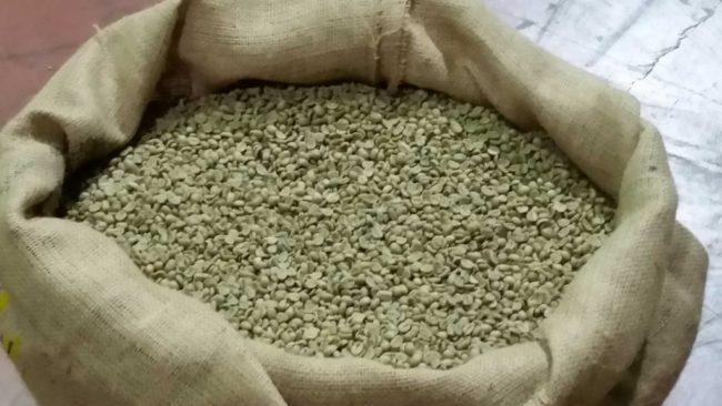 Caffè crudo in sacchi - Caffè Agust