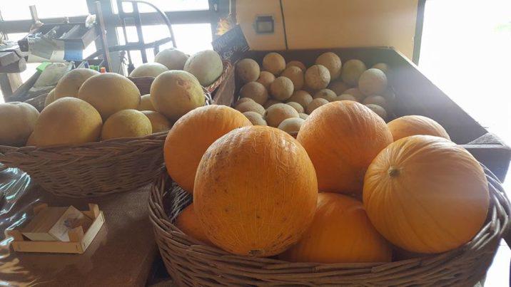 Meloni il Giarone Bio