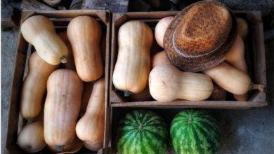 Frutta e verdura di stagione di settembre