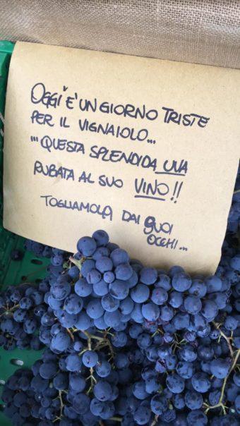 """Uva sangiovese coltivata a Santarcangelo di Romagna da <a href=""""https://www.considerovalore.it/guida-ai-produttori/dal-fatourin/"""">Dal Fatourin</a> ed esposta sui banchi alla Biofera di Canzo."""