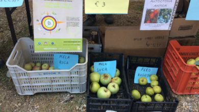 Banco di mele e altro Colle Rio Stirpi