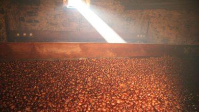 Farina di castagne: come si produce, dove trovarla (artigianale) e come si conserva