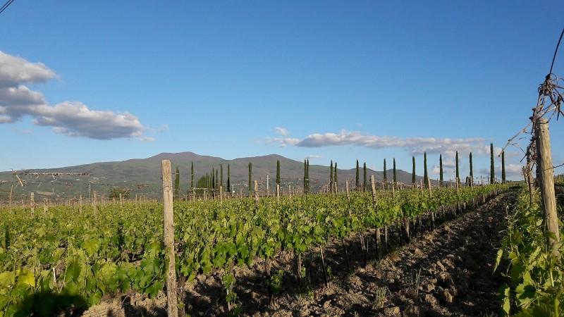 Foto di Az. Agricola Biologica Le Vigne