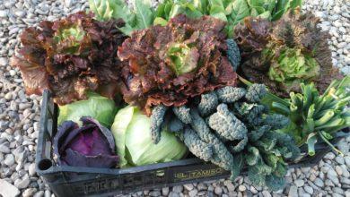 Frutta e verdura di stagione di marzo