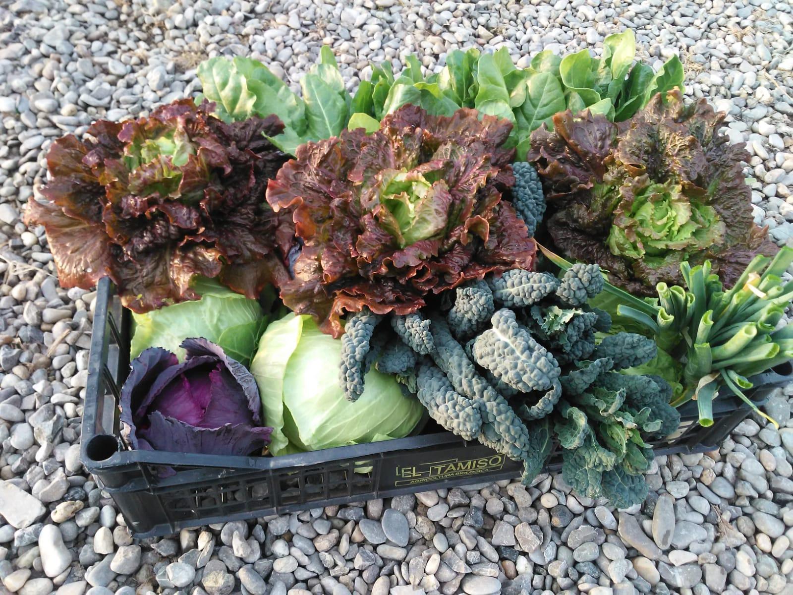 Frutta e verdura di stagione di marzo - az. Mamma che Verdura