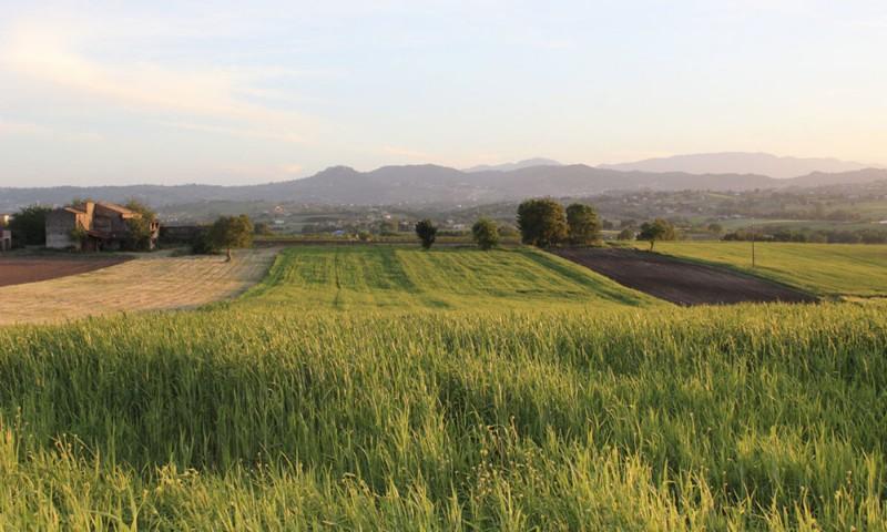 Foto di Azienda Agricola BioLu