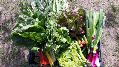 Frutta e verdura di stagione di aprile