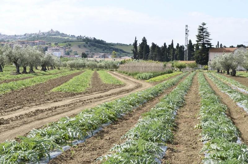 Foto di Azienda Agricola Vallese