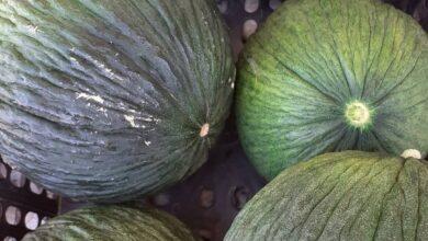 Melone d'inverno Porceddu d'Alcamo La Radice