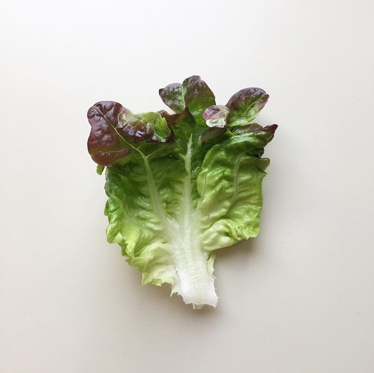 foglia di insalata