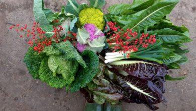 Frutta e verdura di stagione di dicembre
