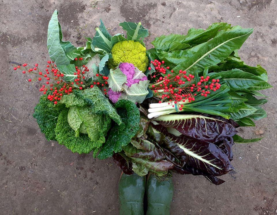 verdure-di-dicembre-la-raccontadina