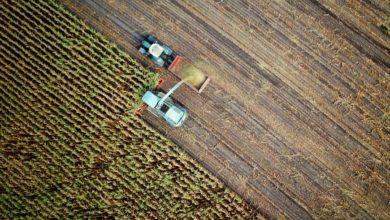 Agricoltura biologica e sostenibilità: ancora polemiche