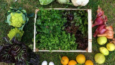 Verdura e frutta di stagione di gennaio