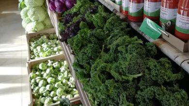 Il Giarone Bio Podenzano - Verdura di stagione
