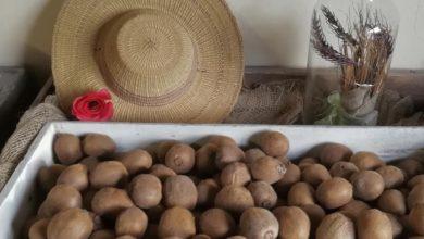 Il Giarone Bio Podenzano - Patate e cappello