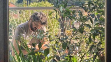 Per un giardino ecosostenibile: l'acquisto delle piante dai vivai locali