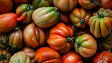 Quanto costa un chilo di pomodori biologici? I conti della serva, ma senza caporali
